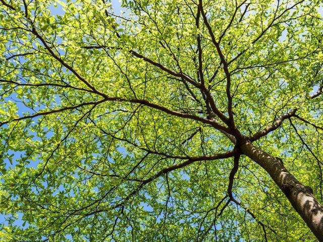 衰弱木の治療再生|吹田市で造園工事はハングアウト・ガーデンにお任せ ...